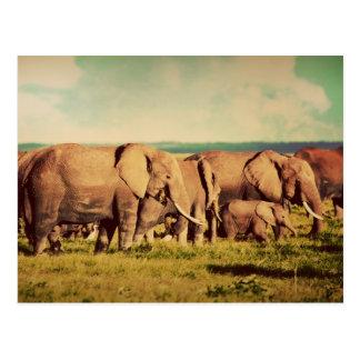 Cartão dos elefantes
