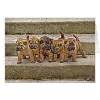 Cartão dos filhotes de cachorro 5 de Shar-Pei em