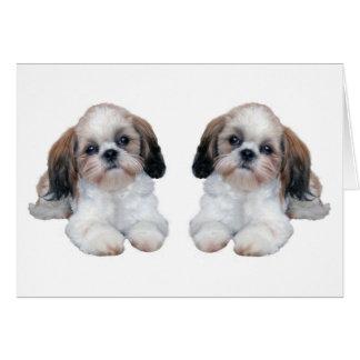 Cartão dos filhotes de cachorro de Shih Tzu