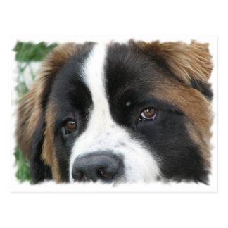 Cartão dos filhotes de cachorro de St Bernard