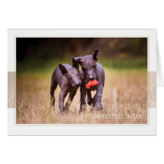 Cartão dos filhotes de cachorro de Xoloitzcuintle