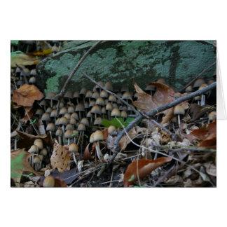 Cartão dos fungos