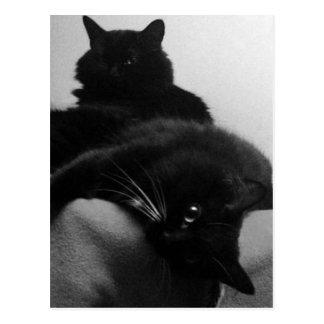 Cartão dos gatinhos do salvamento