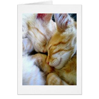 Cartão dos gatinhos do Snuggle