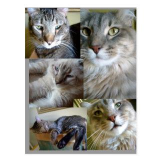 cartão dos gatos da colagem…