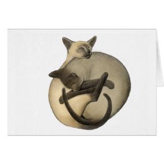 Cartão dos gatos Siamese de Yin Yang