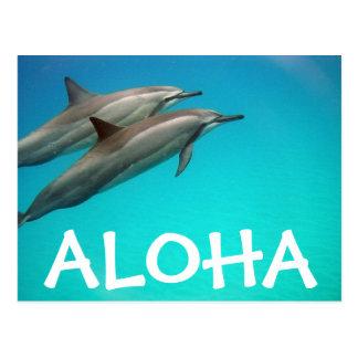 Cartão dos golfinhos de Havaí