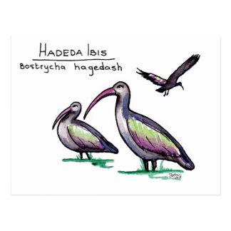 Cartão dos íbis de Hadeda