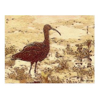 Cartão dos íbis do pântano