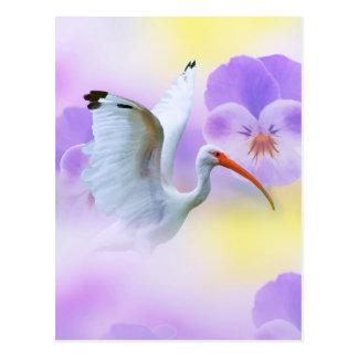 Cartão dos íbis e do amor perfeito