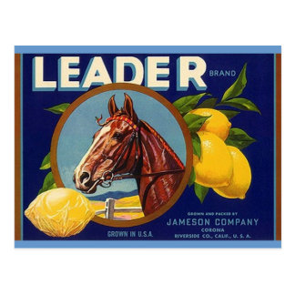 Cartão dos limões do líder do cavalo do puro-sangu cartões postais
