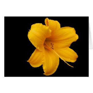 Cartão dos lírios e dos Daffodils