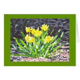Cartão dos mini-Daffodils