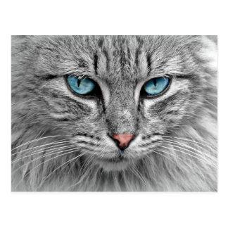Cartão dos olhos azuis