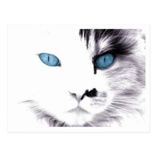 Cartão dos olhos de gato cartão postal