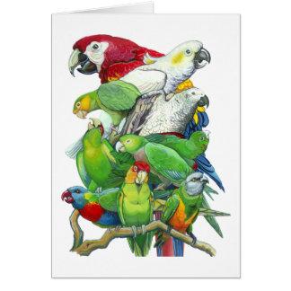Cartão dos papagaios