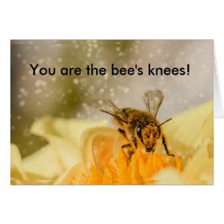 Cartão dos parabéns dos joelhos da abelha