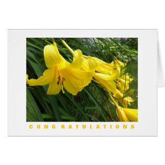 Cartão dos parabéns: Hemerocallis, amarelo