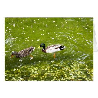 Cartão dos pares do pato do pato selvagem