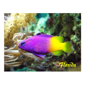 Cartão dos peixes de Florida