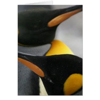 Cartão dos pinguins