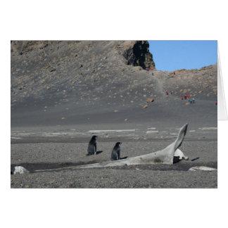 Cartão dos pinguins de Chinstrap (decepção)