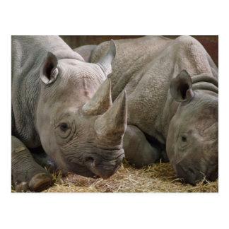 Cartão dos Rhinos do sono