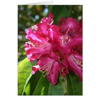 Cartão dos rododendros