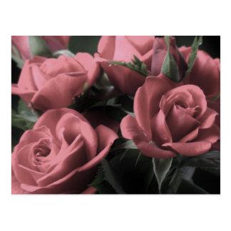 Cartão dos rosas do vintage