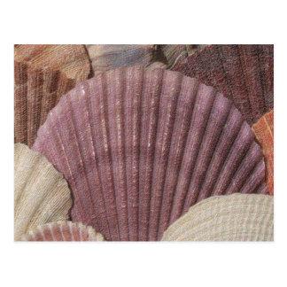 Cartão dos Seashells