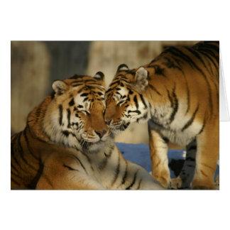 Cartão dos tigres do dia dos namorados