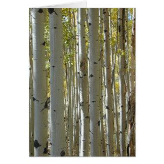 Cartão dos troncos de Aspen