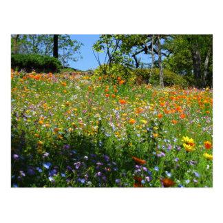 Cartão dos wildflowers de Napa