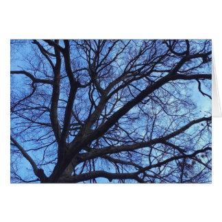 Cartão Dossel de árvore contra um céu azul do inverno -