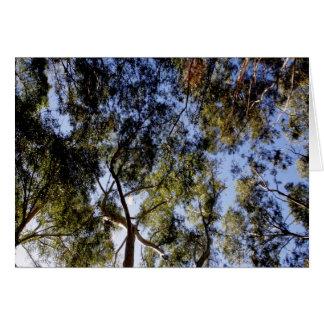 Cartão Dossel de árvore do eucalipto