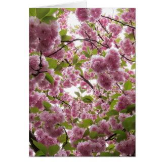 Cartão Dossel II da flor de cerejeira
