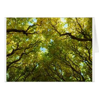 Cartão dourado bonito das árvores