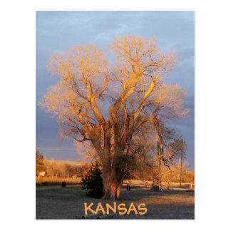 Cartão dourado da árvore do Cottonwood de Kansas