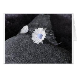 Cartão Duas margaridas brancas que encontram-se na pedra