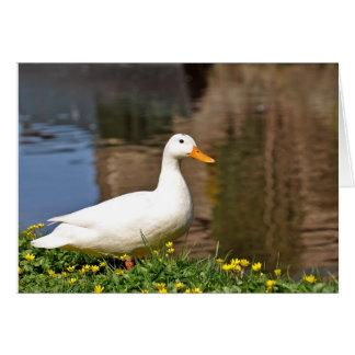Cartão duck001 branco