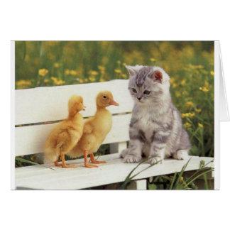 Cartão Duckheap e gatinho da entrevista do amigo