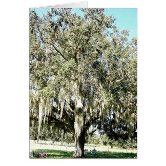 Cartão e envelope velhos do carvalho de Florida