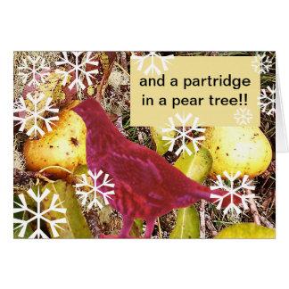 Cartão E uma perdiz em uma árvore de pera