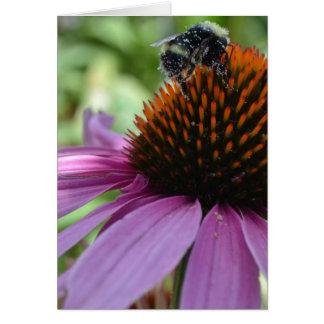Cartão Echinacea e abelha