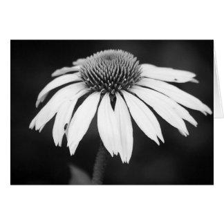 Cartão Echinacea em B&W (vazio)