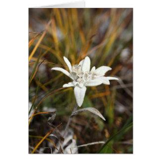 Cartão Edelweiss alpino