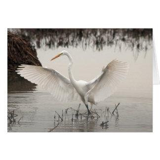 Cartão Egret branco, propagação das asas, lago, enevoado