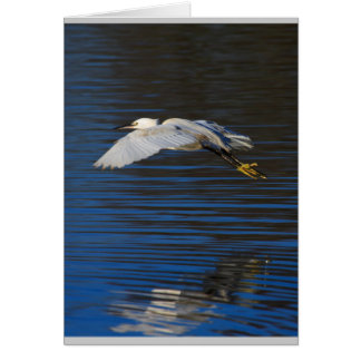 Cartão Egret do vôo