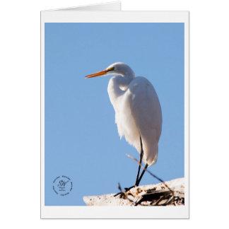 Cartão Egret nevado, parque do lago Atascadero