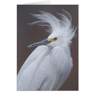 Cartão Egret nevado (thula do Egretta)
